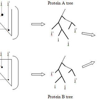 (PDF) Phylogenetic tree information aids supervised