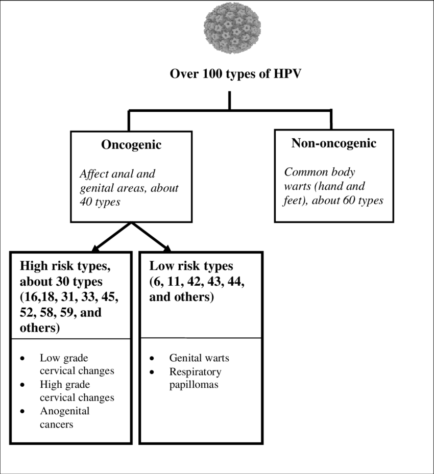 hight resolution of illustration of oncogenic and non oncogenic hpv types