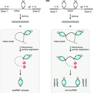 The components of the canonical DNA damage response (DDR