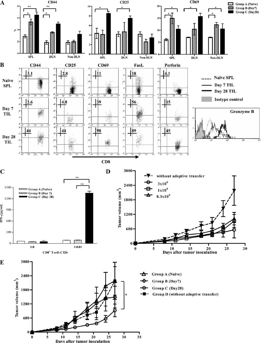 Competent tumor-eradication potency of CD8 ϩ T cells from