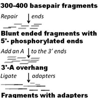Illumina sample preparation protocol, adapted from the