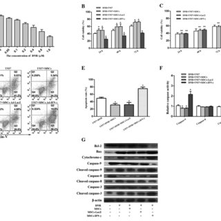 (PDF) Adenovirus-mediated delivery of the human IFN-γ gene