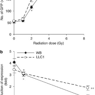 Radiation increases transferrin receptor (TfR) expression