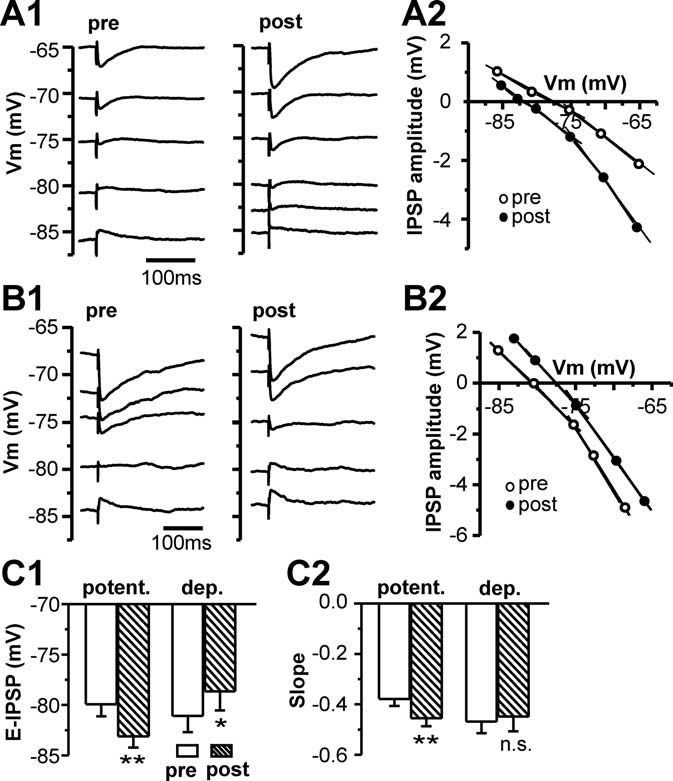 Bidirectional shifts of the E IPSP are associated with