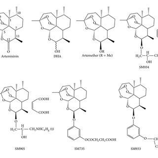 Schematic of artemisinin derivatives affecting immune and