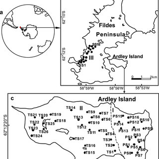 Effects of penguin activities on the spatial distribution