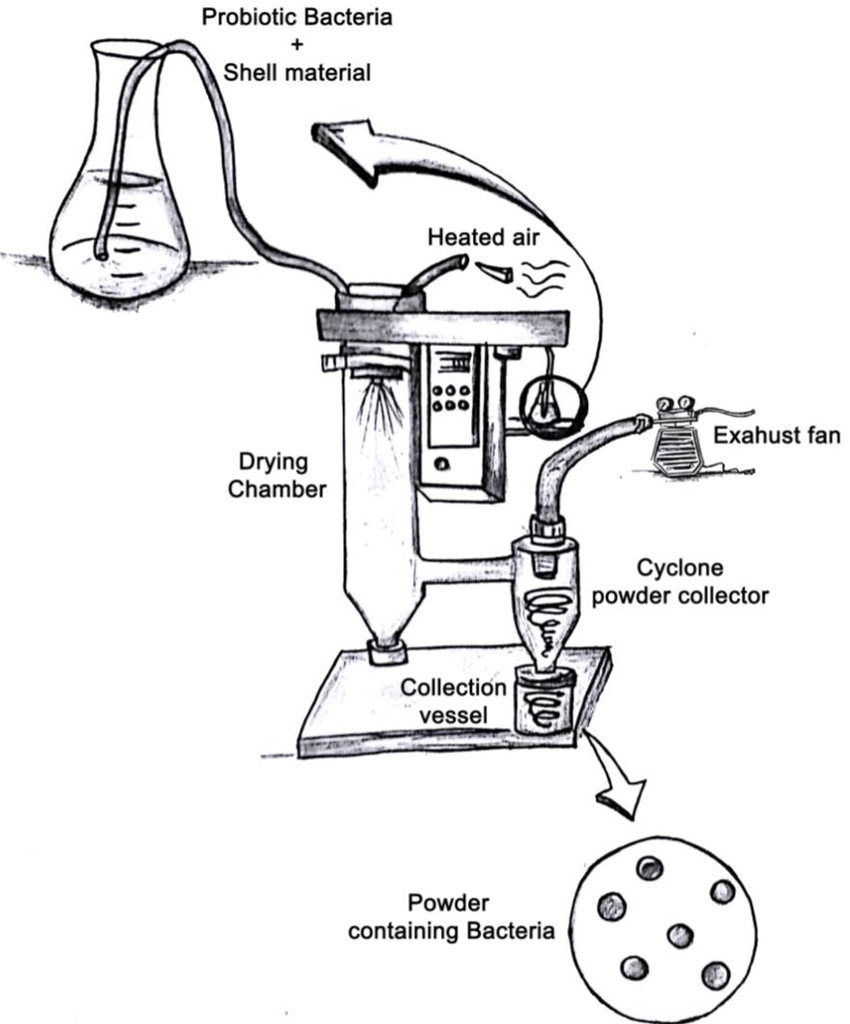 hight resolution of schematic diagram of the spray drying encapsulation method