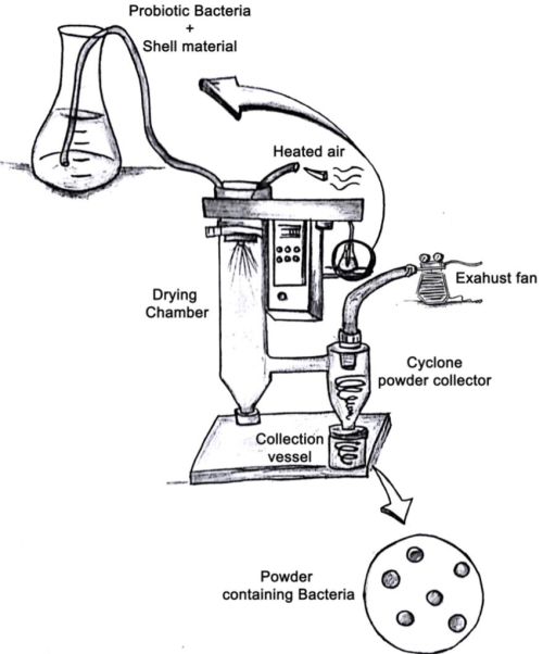 small resolution of schematic diagram of the spray drying encapsulation method
