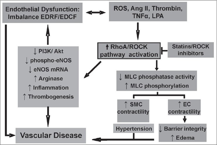 Sustained vascular endothelial dysfunction defi ned as an