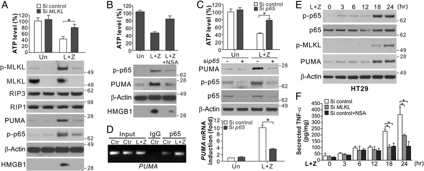 Fig. 2. Induction of PUMA is mediated by NF-κB downstream