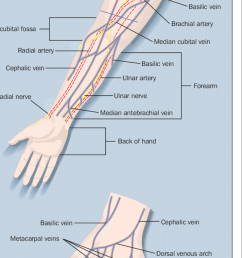 the superficial veins of the forearm and the hand with cannulation sites  [ 850 x 1668 Pixel ]