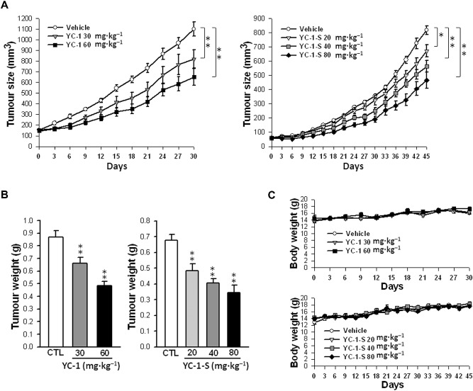 Antitumour activity of YC-1 in MDA-MB-468 xenograft mouse
