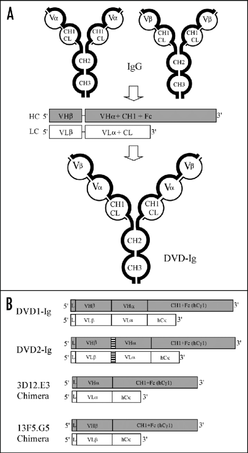 small resolution of schematic diagram of dual variable domain dvd ig a generation