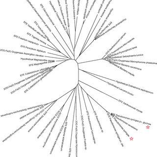 (PDF) Ethylene-forming enzyme and bioethylene production