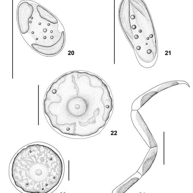 (PDF) Khaybullina L.S., Gaysina L.A., Johansen J.R