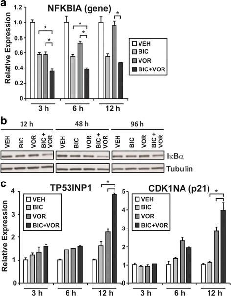 The effect of combinatorial AR targeting on NFKBIA levels
