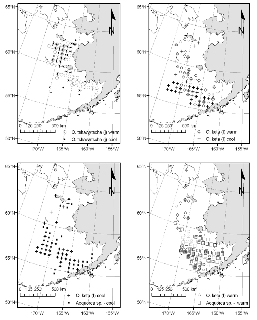 medium resolution of and jellyfish species from the u s basis survey bering aleutian salmon international surveys during fall warm and cool years