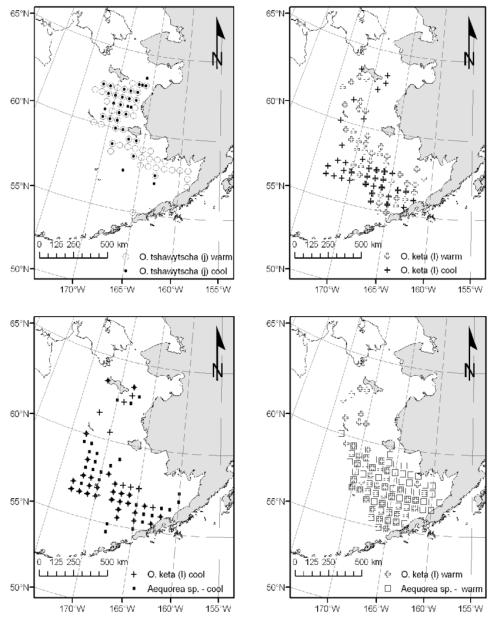 small resolution of and jellyfish species from the u s basis survey bering aleutian salmon international surveys during fall warm and cool years