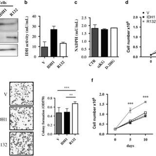 Caspase 3 activation was determined with DEVDase activity