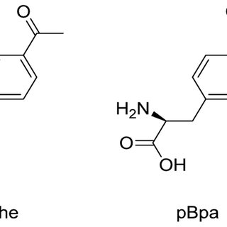 (A and B) Co-translational incorporation of tyrosine at