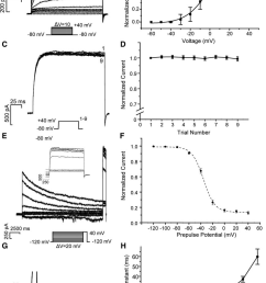 kinetics of voltage gated outward k channels in taste receptor cells a k [ 850 x 1235 Pixel ]