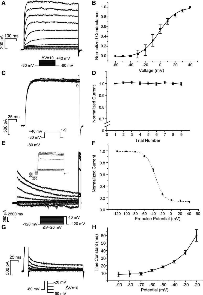 hight resolution of kinetics of voltage gated outward k channels in taste receptor cells a k