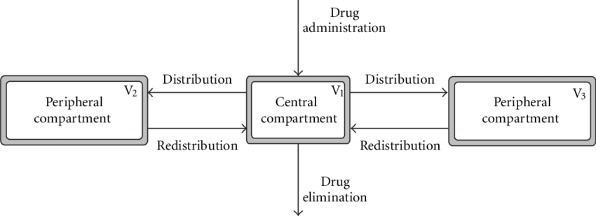 Schematic representation of a three-compartment model