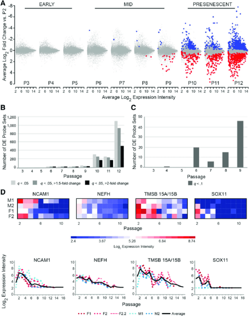 small resolution of the transcriptome of human umbilical cord perivascular cells hucpvcs is stable through p5