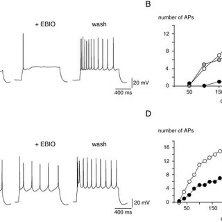 (PDF) Control of Electrical Activity in Central Neurons by