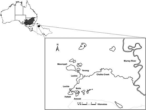 wetland system diagram
