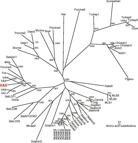 Phylogenetic Analysis of Astrovirus ORF2 capsid protein