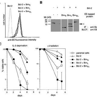 Different killing activities of the three Bim isoforms