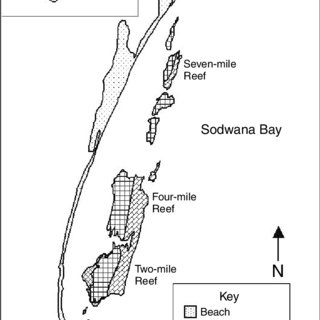 (PDF) Coral dominance at the reef–sediment interface in