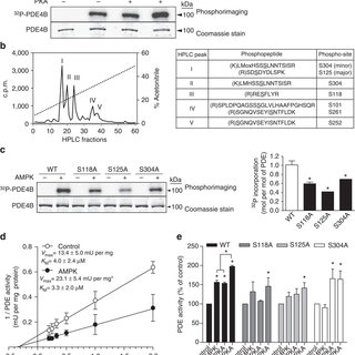 AMPK activation decreases cAMP levels by activating a PDE