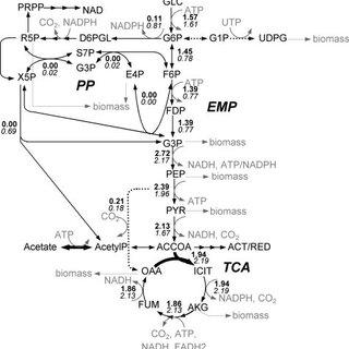 S. coelicolor genome-scale metabolic model predicted