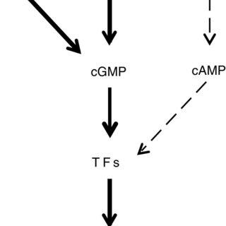 (PDF) A cyclic nucleotide sensitive promoter reporter