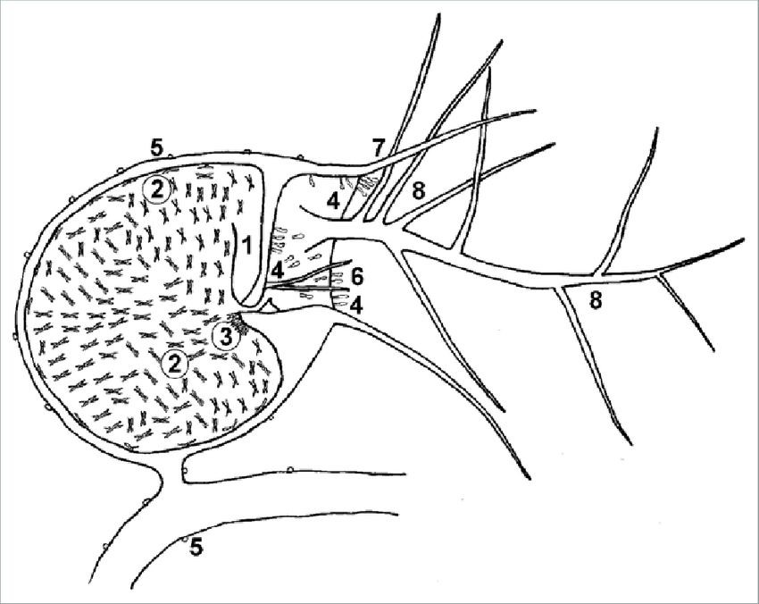 Schematic longitudinal section through a trap of
