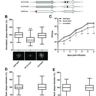 (PDF) The Role of Marek's Disease Virus UL12 and UL29 in