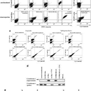 (PDF) Single-point mutations of a lysine residue change