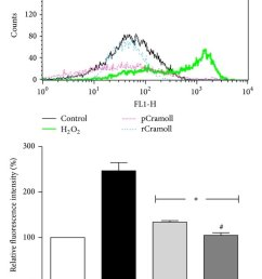 effect of pcramoll and rcramoll on h2o2 induced loss of m in vero cells  [ 850 x 1184 Pixel ]