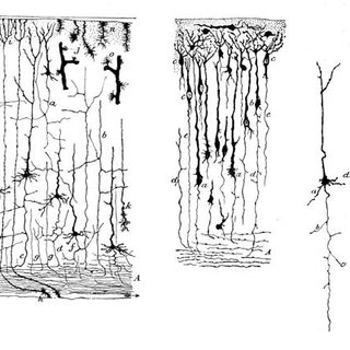 Self-portrait of Cajal and his microscope. This