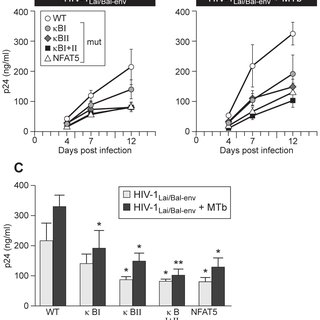 Specific disruption of NFAT5 or NF- k B binding sites in