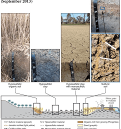 explanatory soil regolith model for the banrock wetland with soil profile photographs and cross  [ 850 x 996 Pixel ]