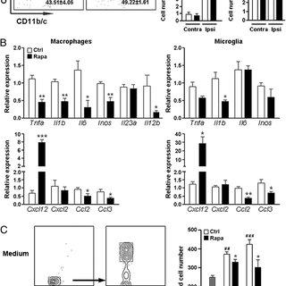 (PDF) mTOR Signaling Inhibition Modulates Macrophage