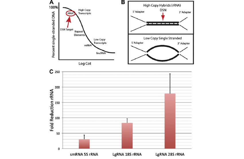 Duplex specific nuclease (DSN) removal of rRNA sequences
