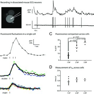 (PDF) Fluorescence-Based Monitoring of In Vivo Neural