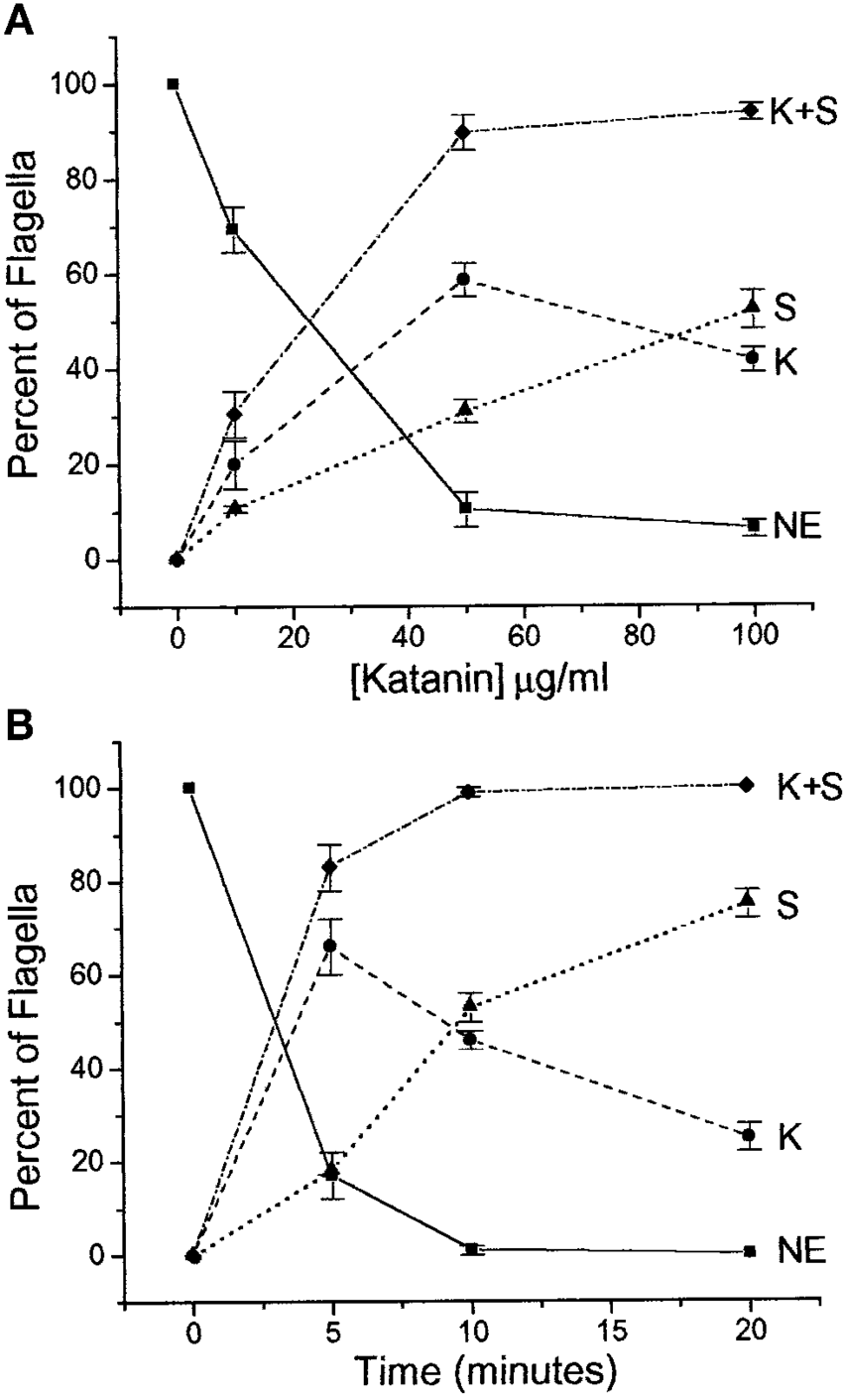 hight resolution of katanin mediated breakage of chlamydomonas flagella is both dose and time dependent a