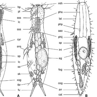 (PDF) An overview and a dichotomous key to genera of the