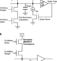 schematic of neurons implemented on the cpg chip a pacemaker and integrate and  [ 731 x 1364 Pixel ]