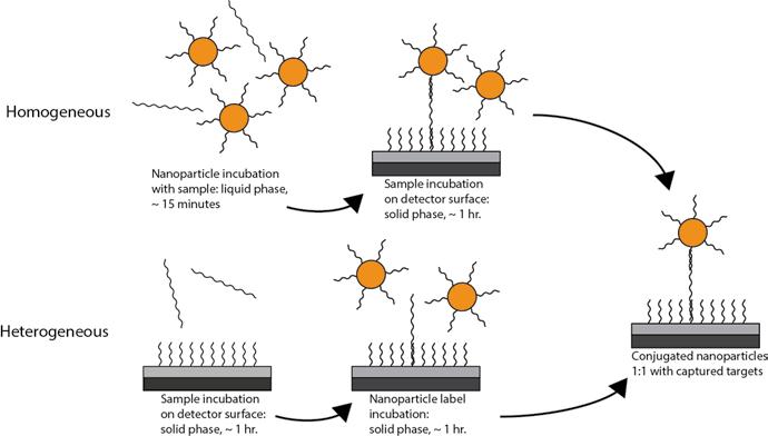 4 Flow chart of homogeneous and heterogeneous detection of
